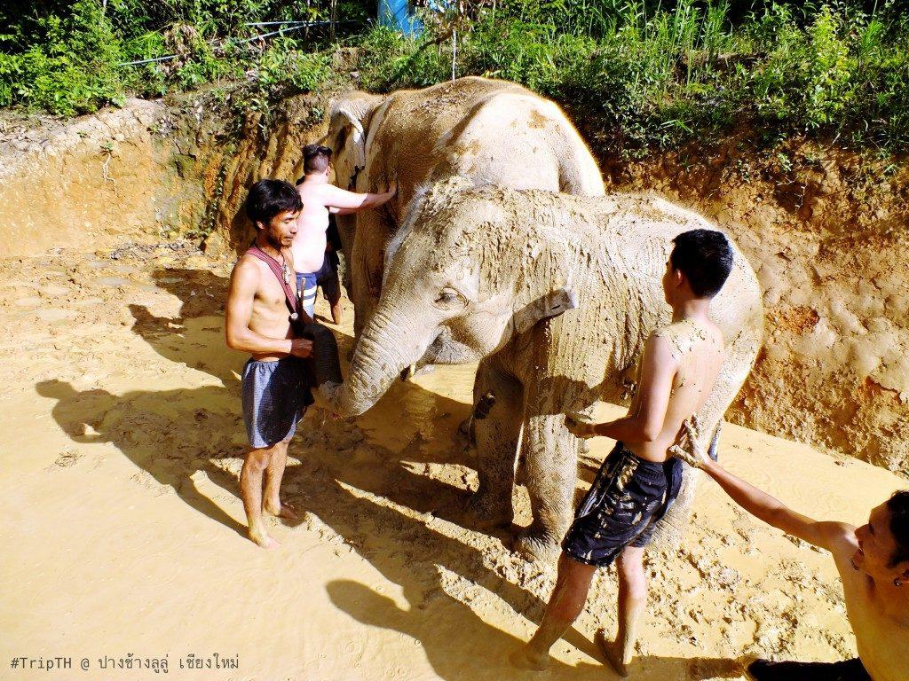 สปา เชียงใหม่ ปางช้างลูลู่ (3)