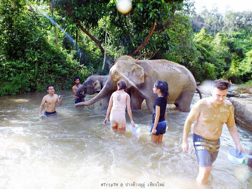 อาบน้ำให้ช้าง เชียงใหม่ (2)
