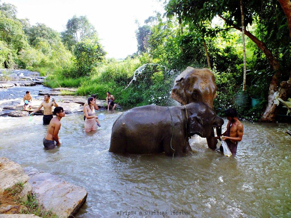 เล่นน้ำกับช้าง เชียงใหม่ (1)