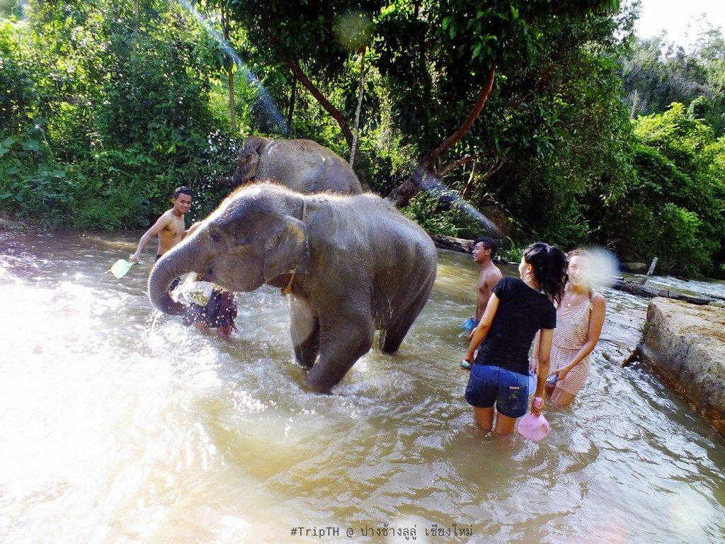 เล่นน้ำกับช้าง เชียงใหม่ (3)