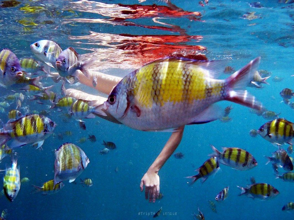 %e0%b8%94%e0%b8%b3%e0%b8%99%e0%b9%89%e0%b8%b3-snorkeling-2