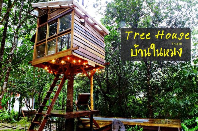 บ้านในหมง (Tree House)