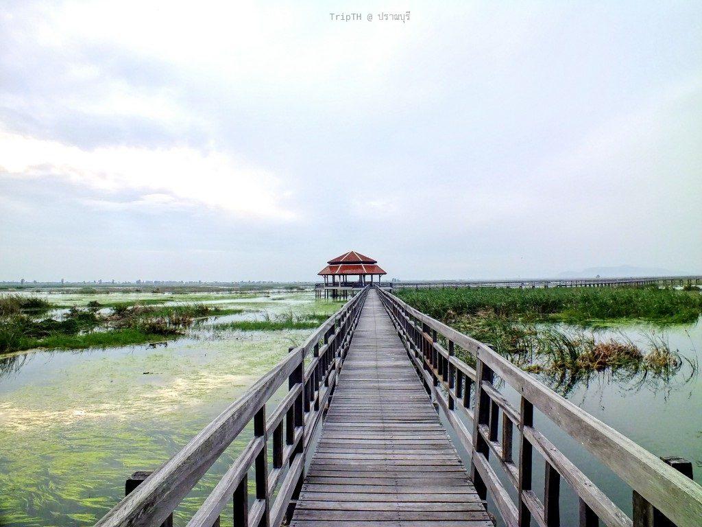 บึงบัว สามร้อยยอด ปราณบุรี (2)