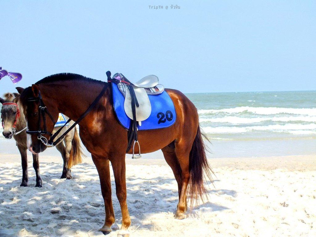 หาดหัวหิน (4)