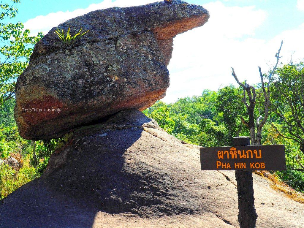 อุทยานแห่งชาติภูหินร่องกล้า (2)