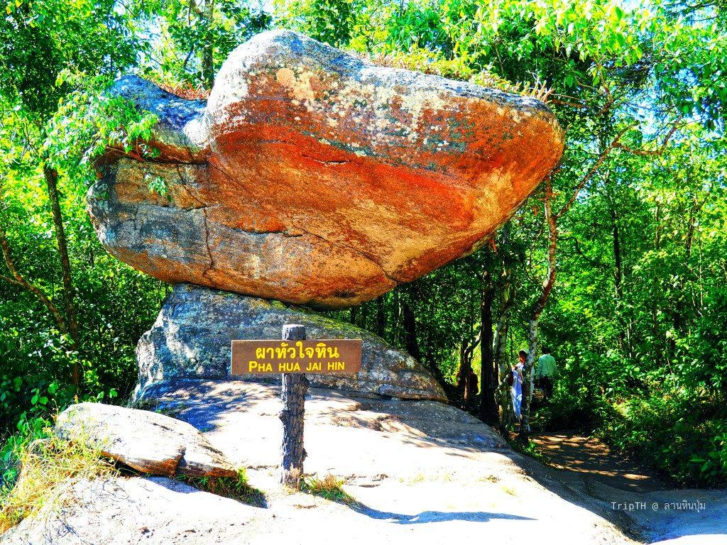 อุทยานแห่งชาติภูหินร่องกล้า (3)