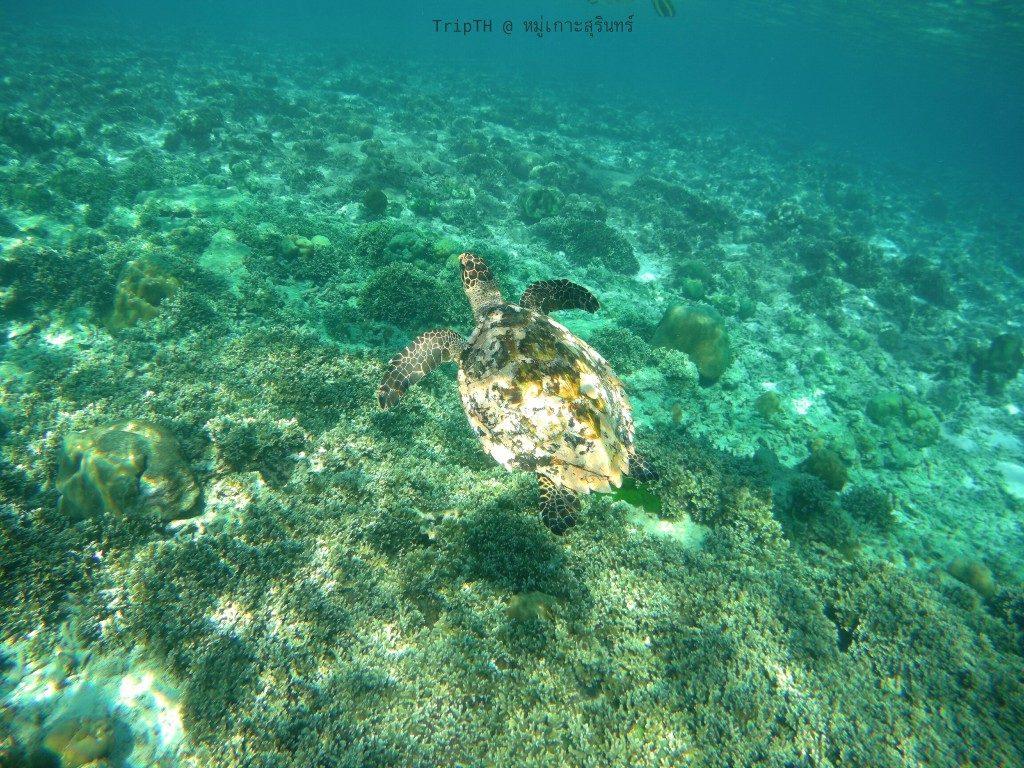 เกาะตอริลลา (2)