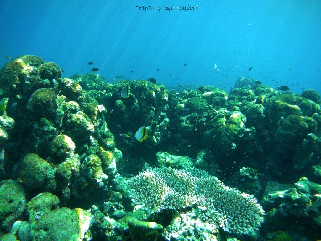 เกาะตอริลลา (4)