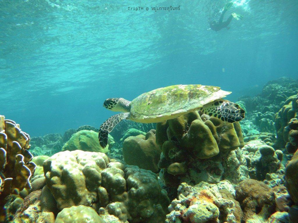 เกาะสตอร์ก (2)