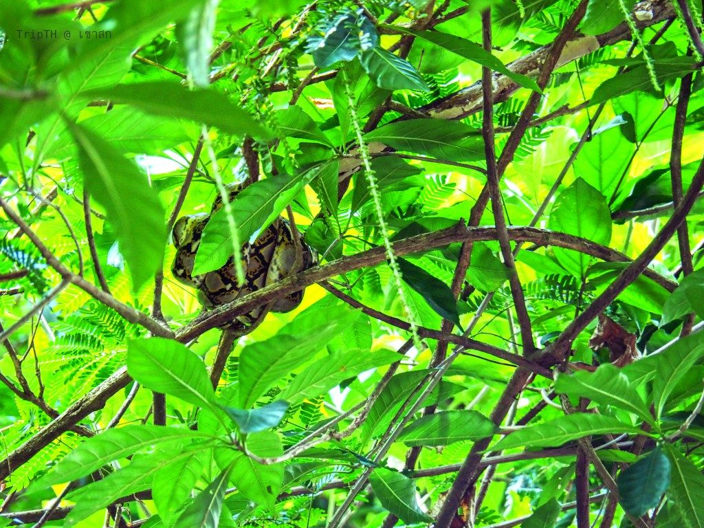 งู (2)