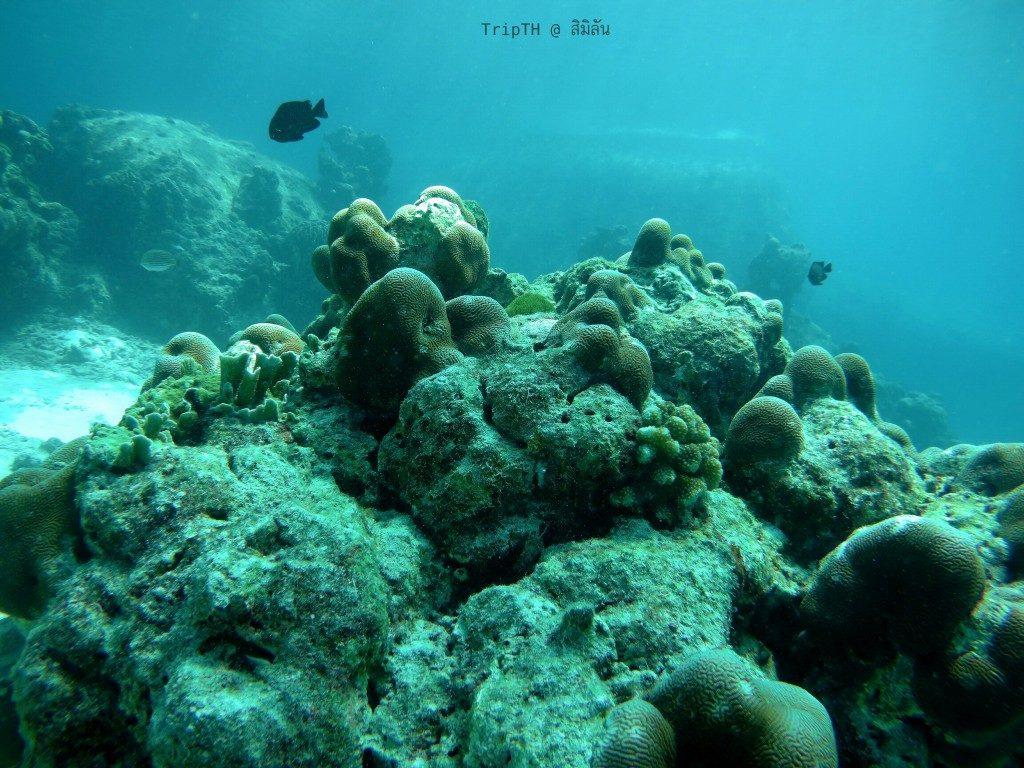 ดำน้ำ เกาะสิมิลัน (4)