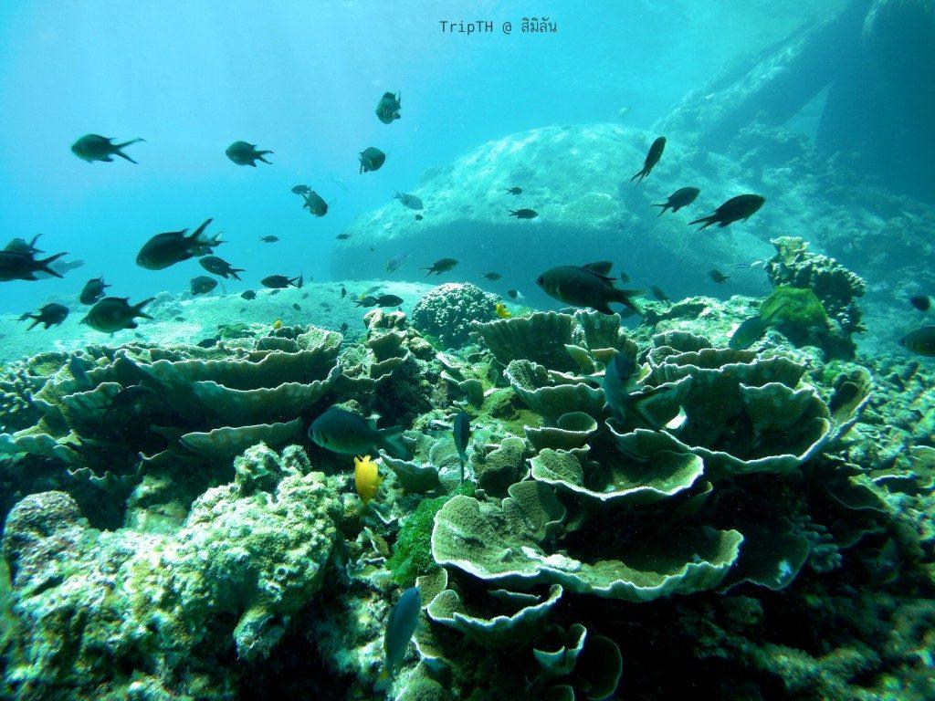 ดำน้ำ เกาะสิมิลัน (5)