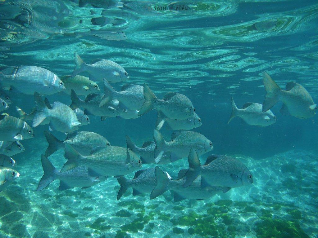 ดำน้ำ เกาะ 9 (1)