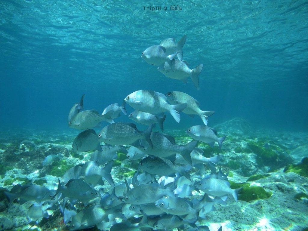 ดำน้ำ เกาะ 9 (3)