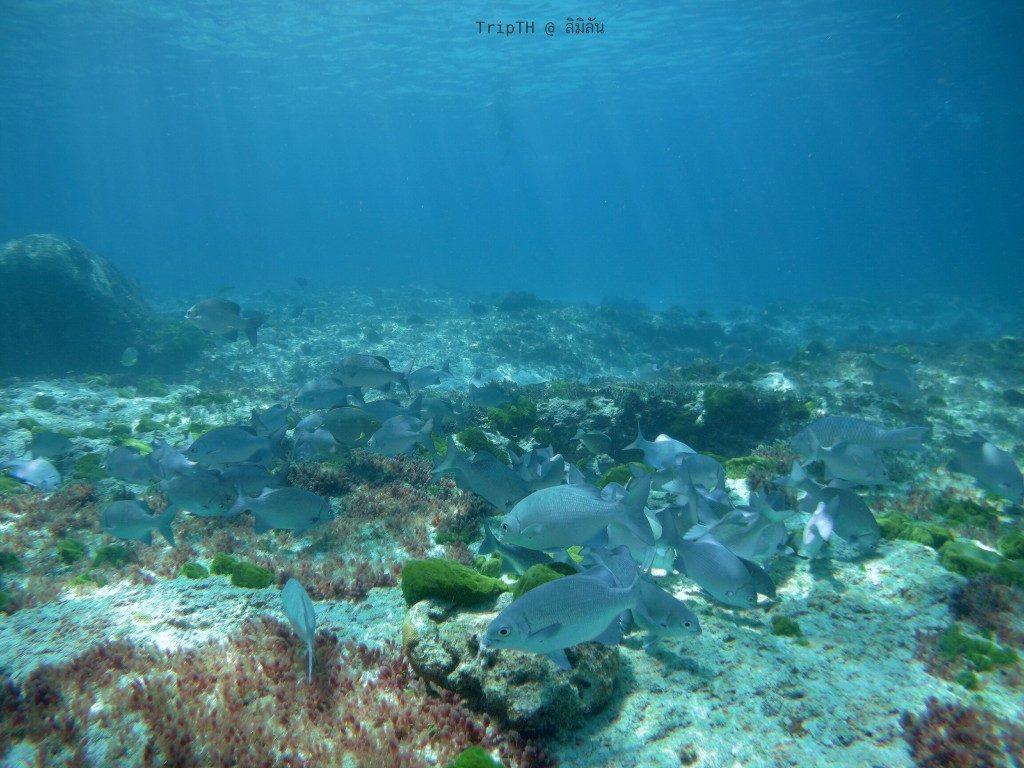 ดำน้ำ เกาะ 9 (4)