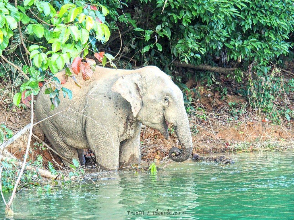 ดูช้าง ต้นน้ำคลองแสง (3)