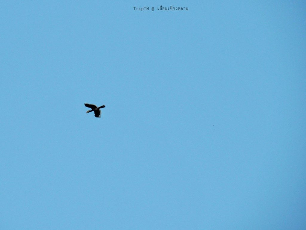 นกเงือก (2)