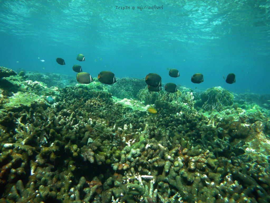 เกาะสตอร์ก (3)