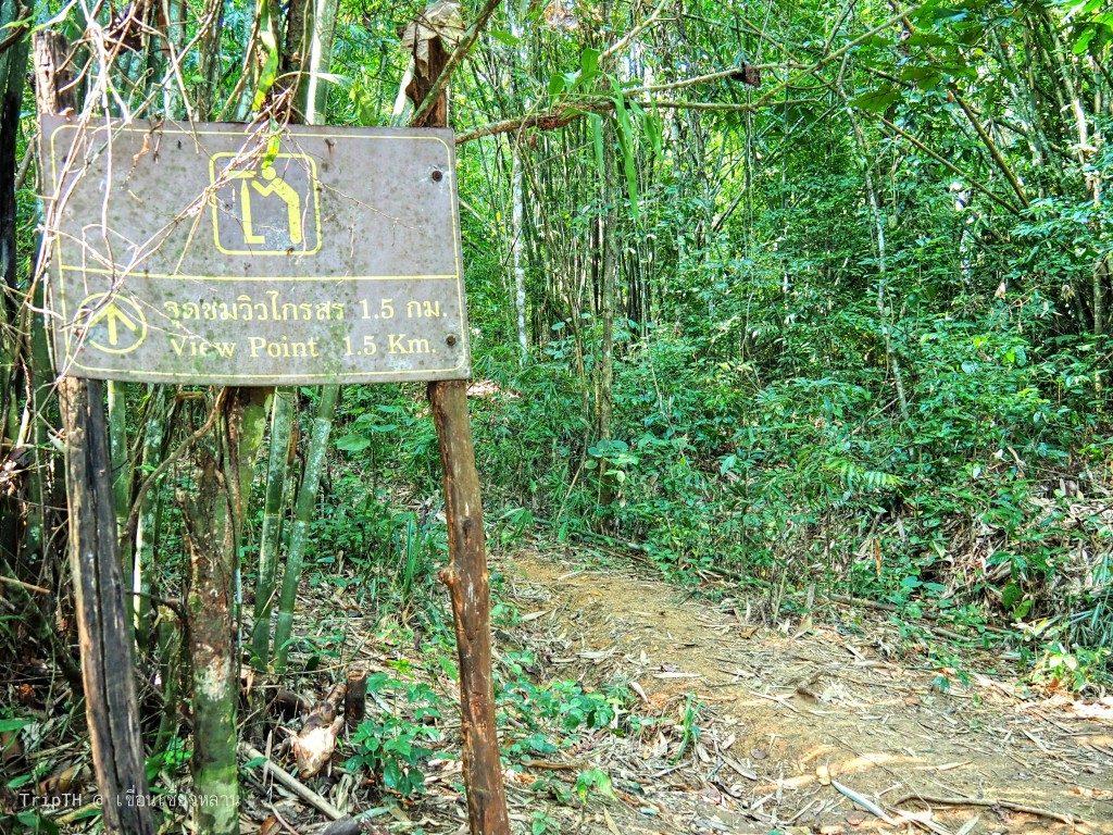 เดินป่า (1)