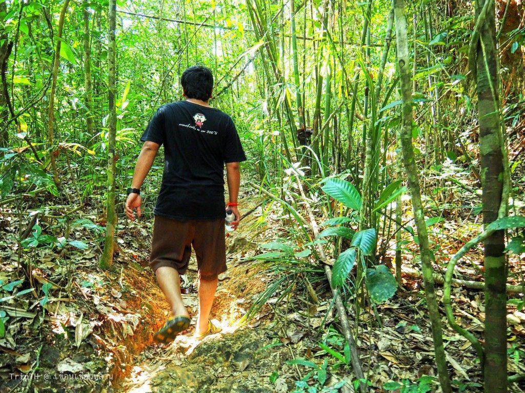 เดินป่า (2)