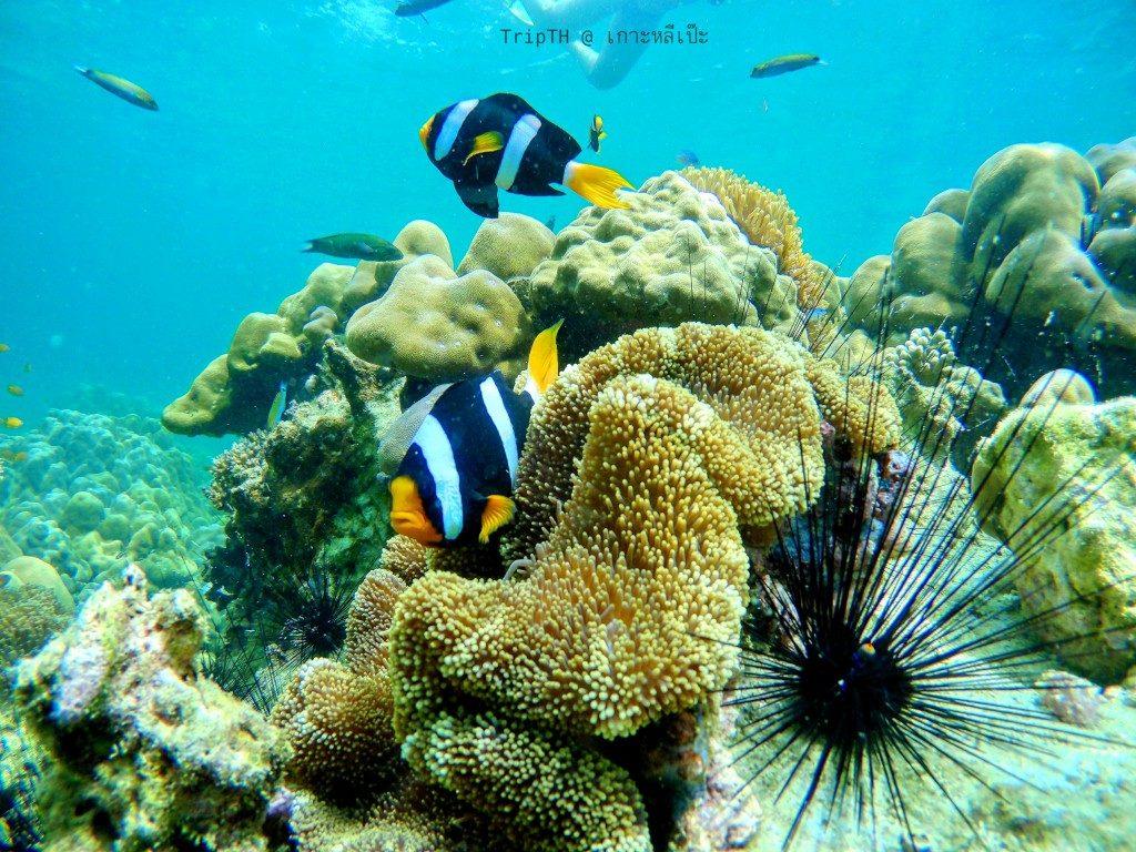 ดำน้ำ เกาะผึ้ง (3)