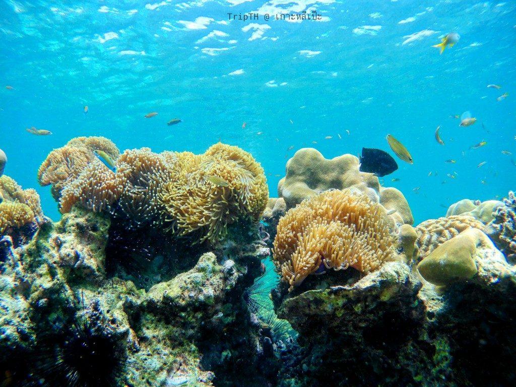 ดำน้ำ เกาะผึ้ง (6)