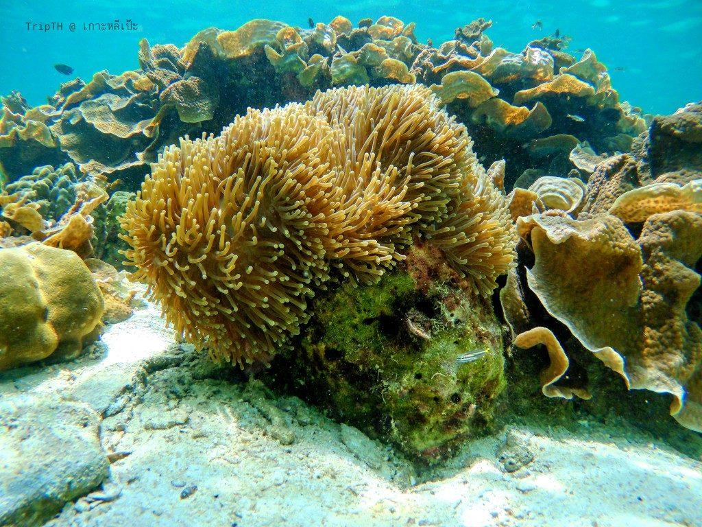 ดำน้ำ เกาะยาง (2)