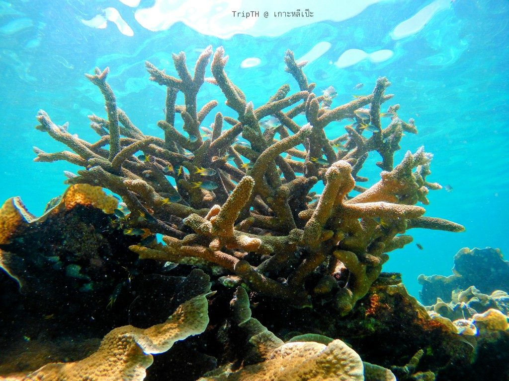 ดำน้ำ เกาะยาง (3)