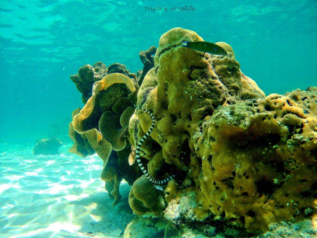 ดำน้ำ เกาะยาง (4)