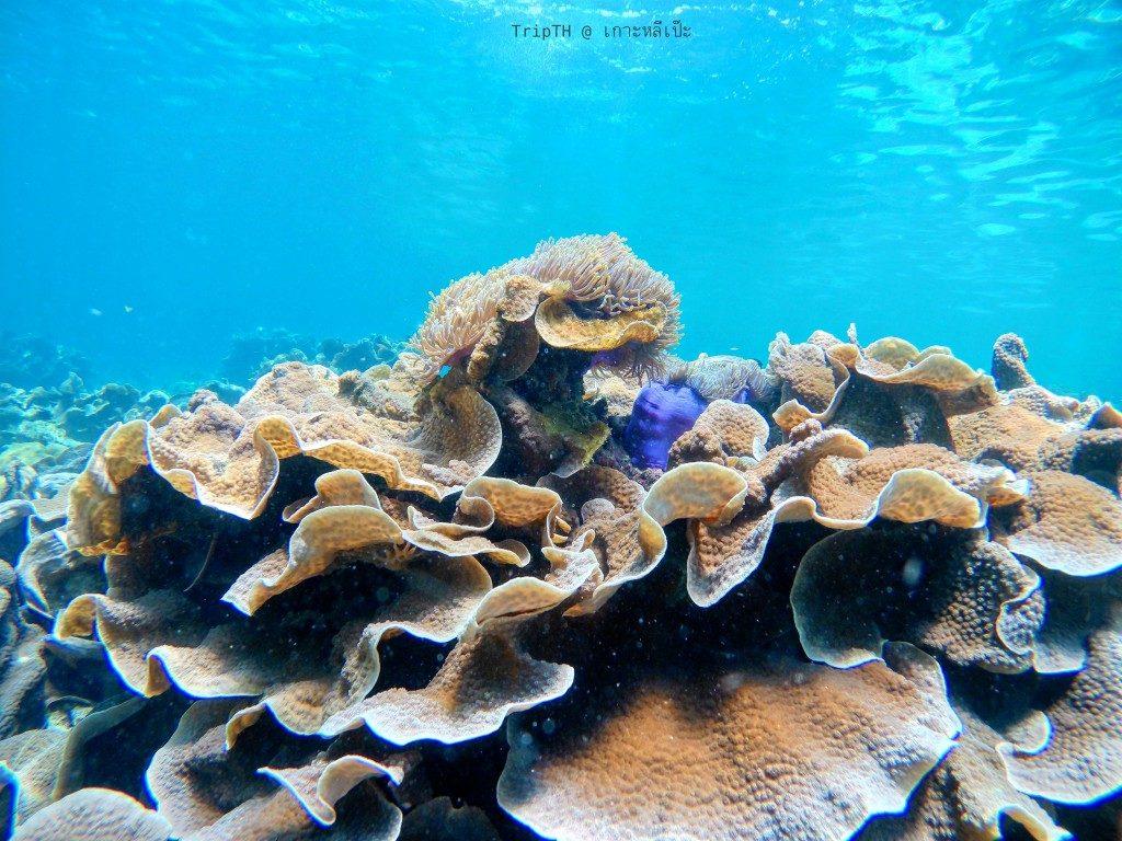 ดำน้ำ เกาะยาง (5)