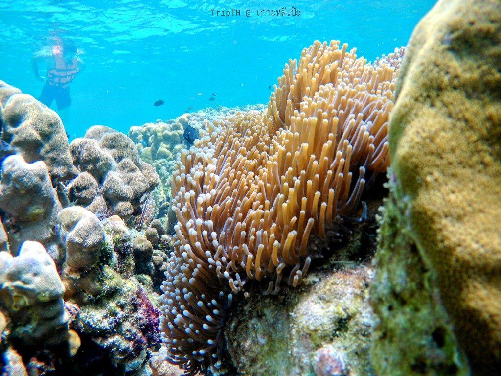 ดำน้ำ เกาะรอกลอย (2)