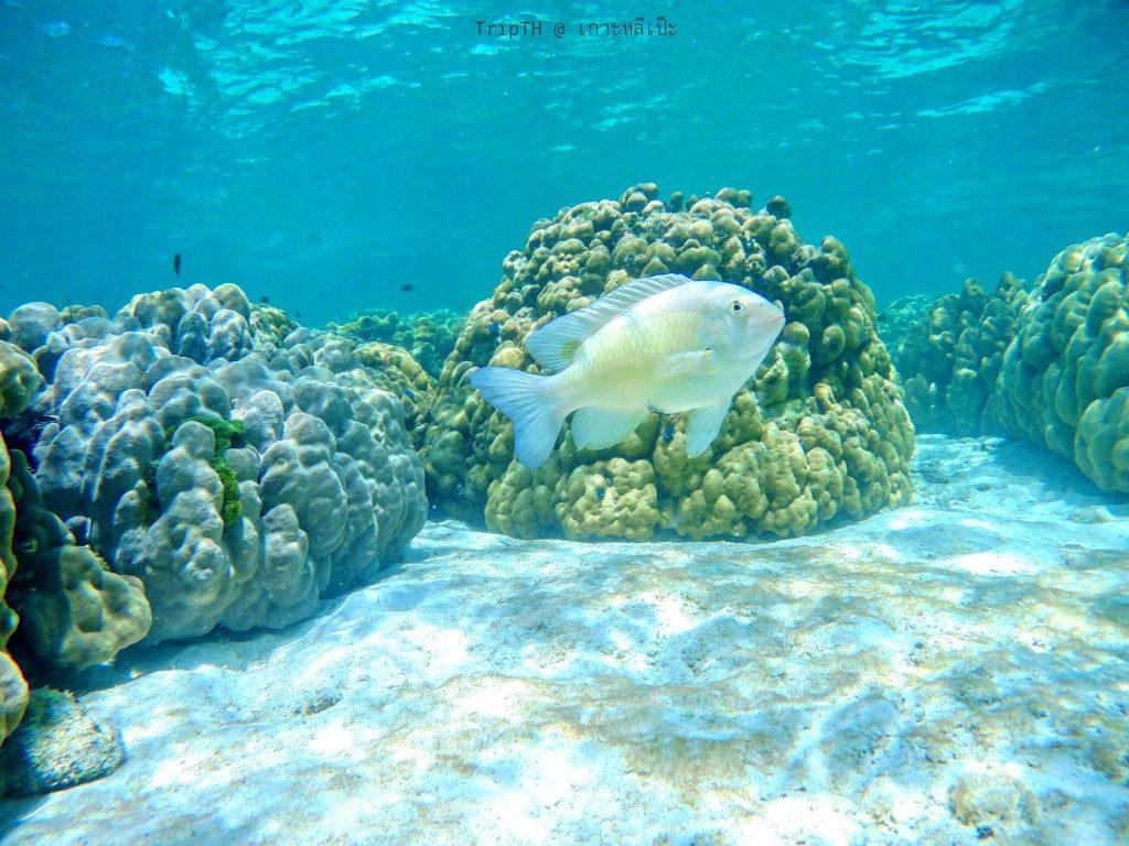 ดำน้ำ เกาะรอกลอย (4)