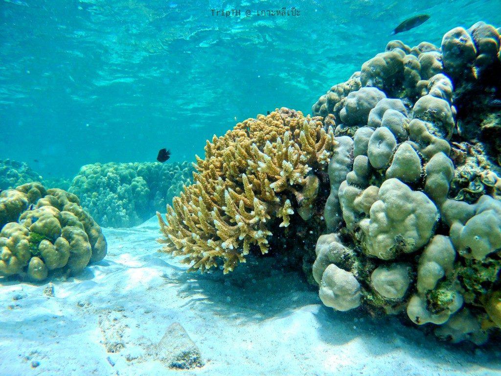 ดำน้ำ เกาะรอกลอย (5)