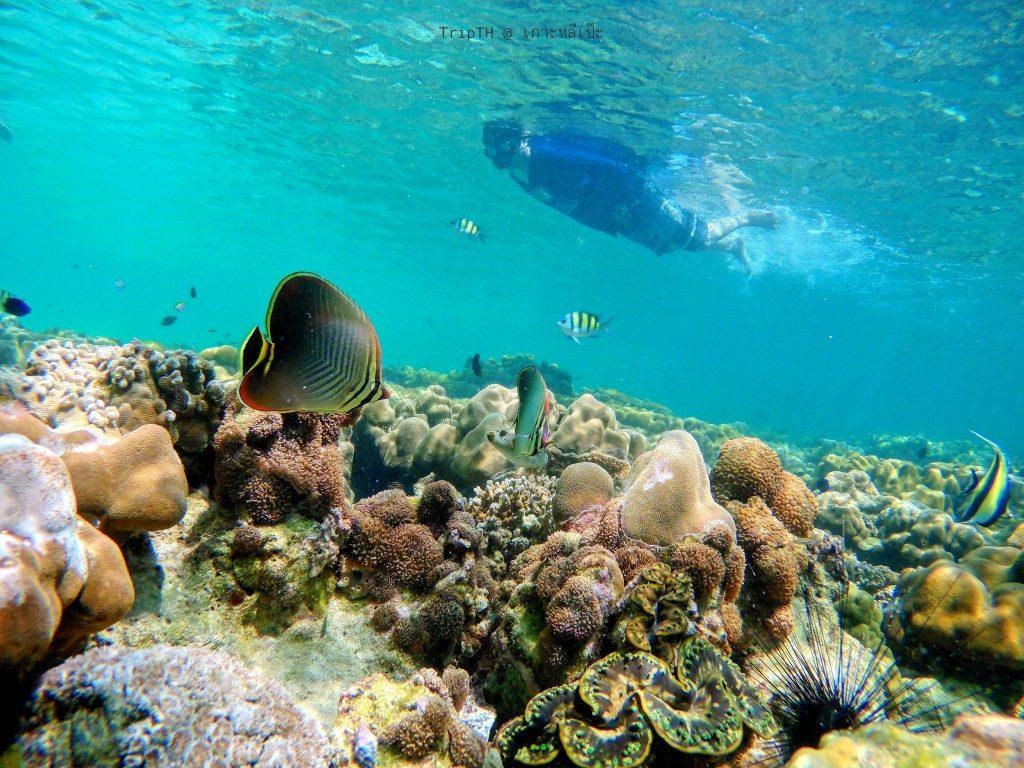 ดำน้ำ เกาะอาดัง (1)