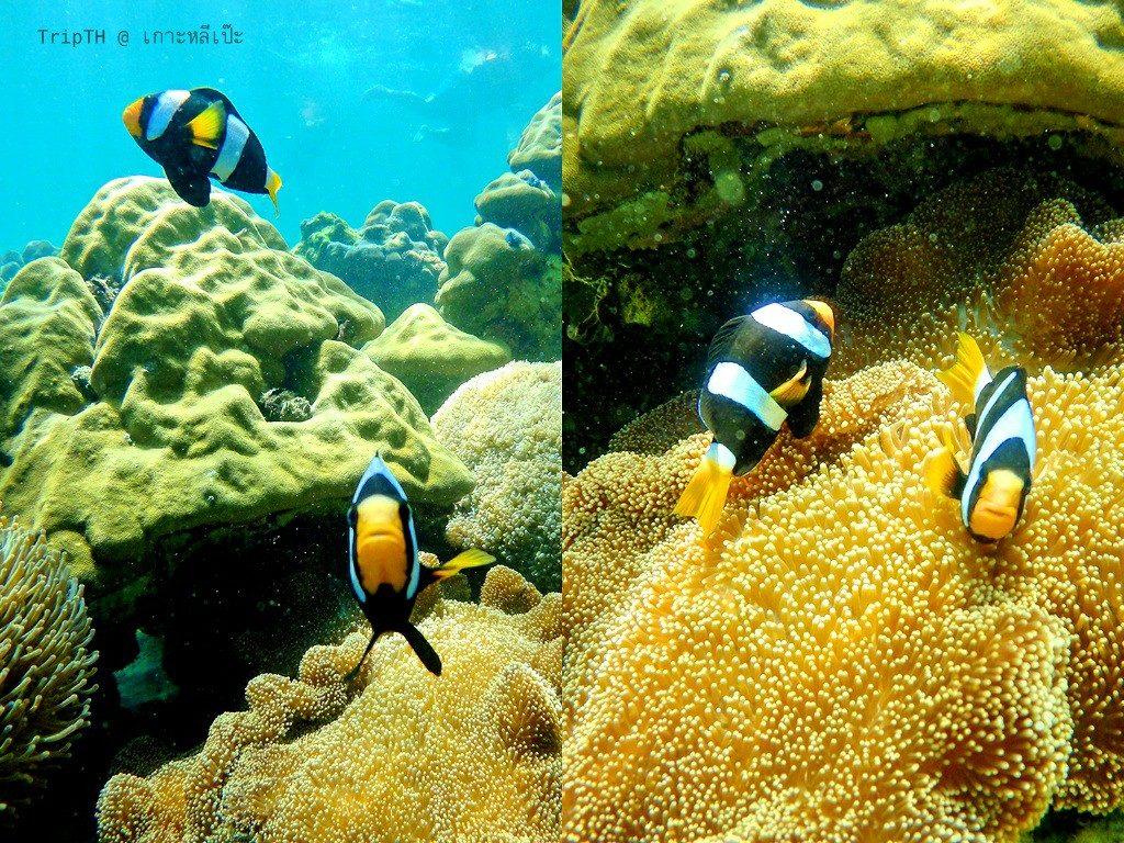 ดำน้ำ เกาะอาดัง (4)