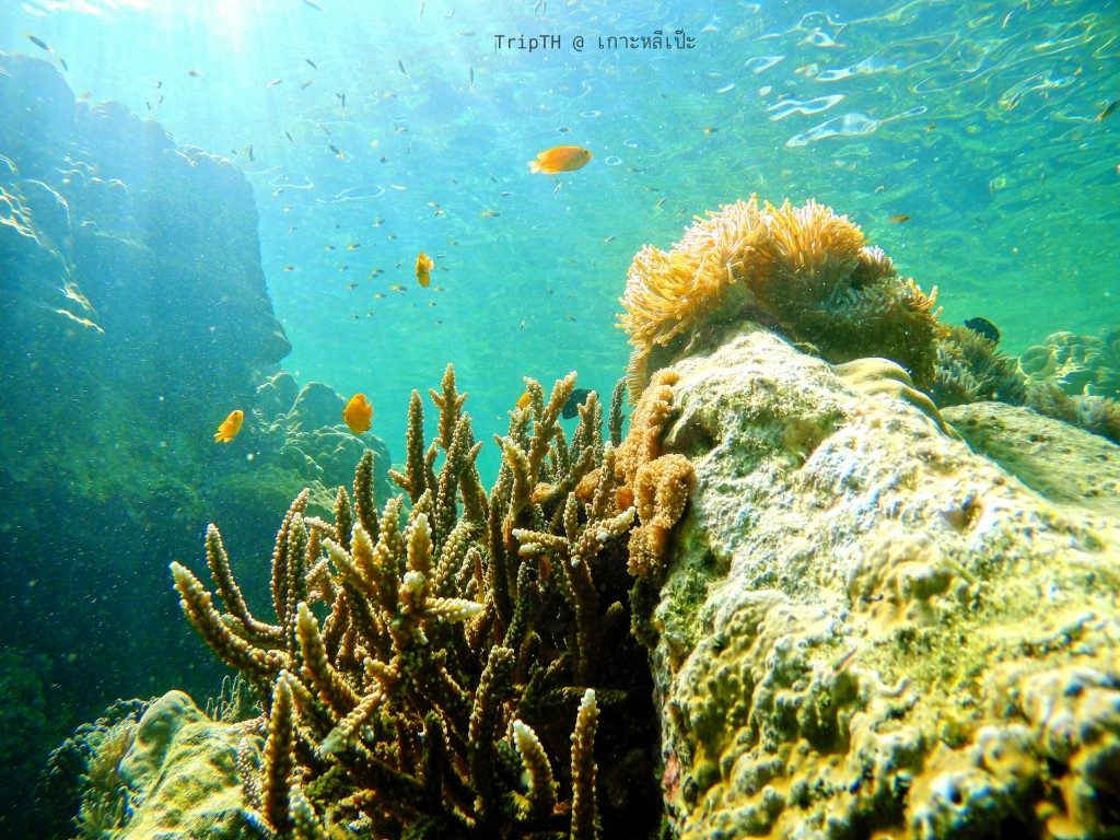 ดำน้ำ เกาะไม้ไผ่ (2)