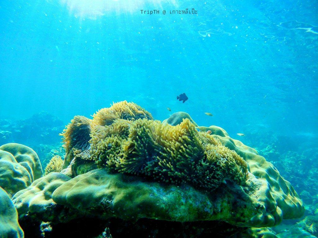 ดำน้ำ เกาะไม้ไผ่ (3)