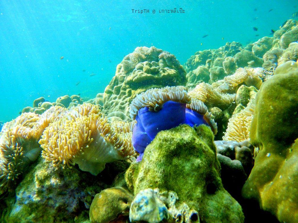 ดำน้ำ เกาะไม้ไผ่ (4)