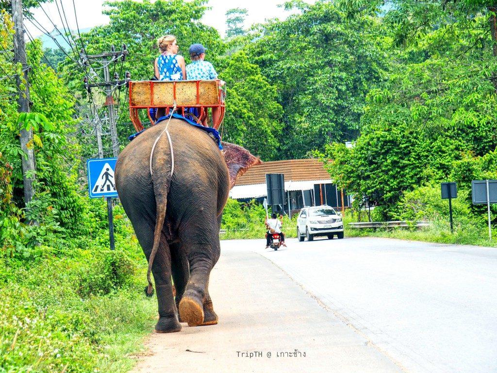 ช้างเกาะช้าง