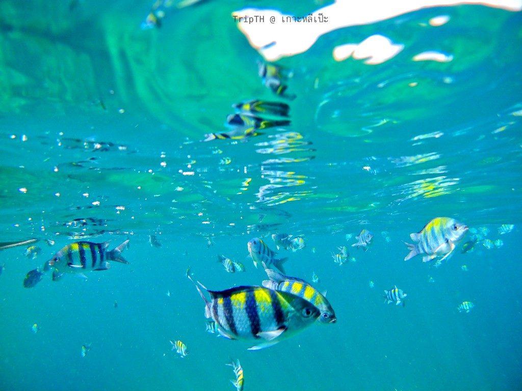 ดำน้ำร่องน้ำจาบัง (2)