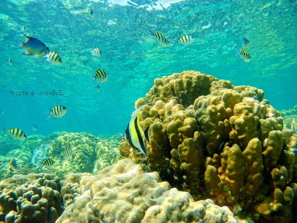 ดำน้ำเกาะหินงาม (2)