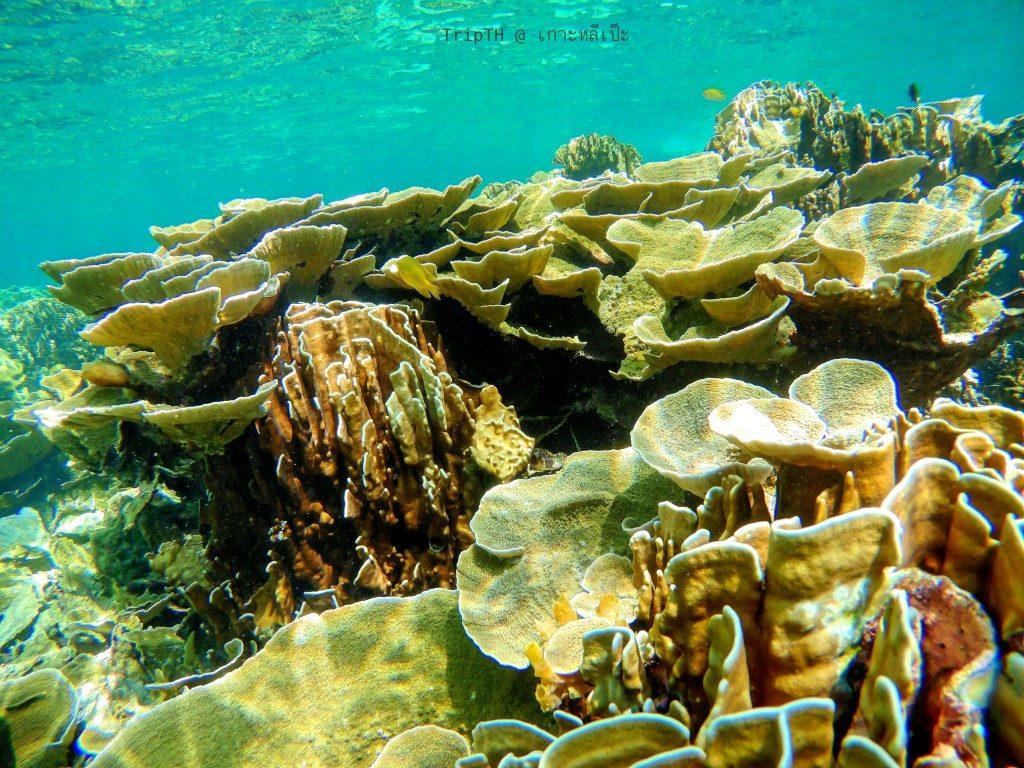 ดำน้ำเกาะหินงาม (3)