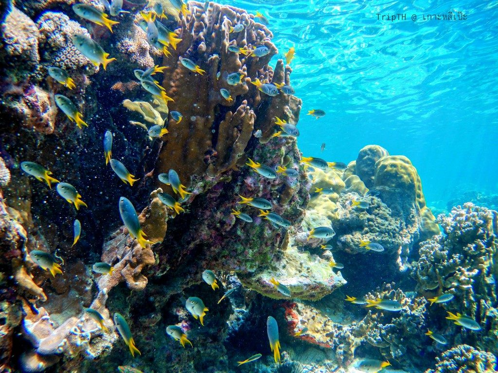ดำน้ำเกาะหินงาม (5)