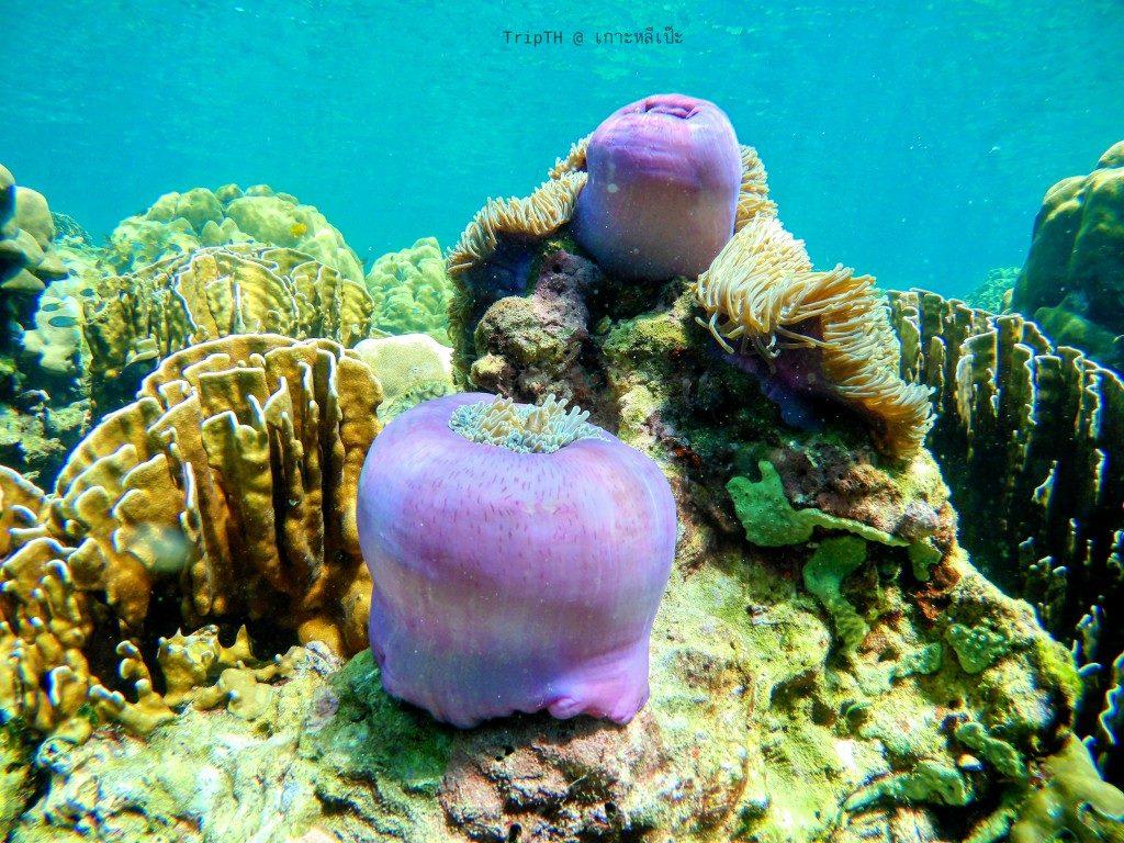 ดำน้ำเกาะหินงาม (6)