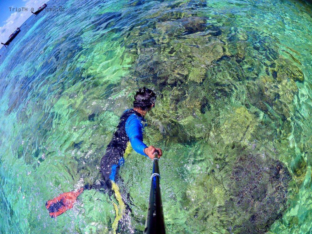 ดำน้ำ เกาะดง (1)