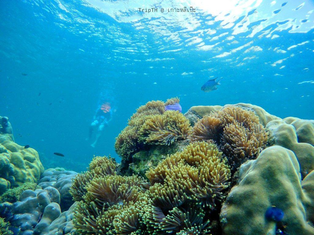 ดำน้ำ เกาะผึ้ง (1)