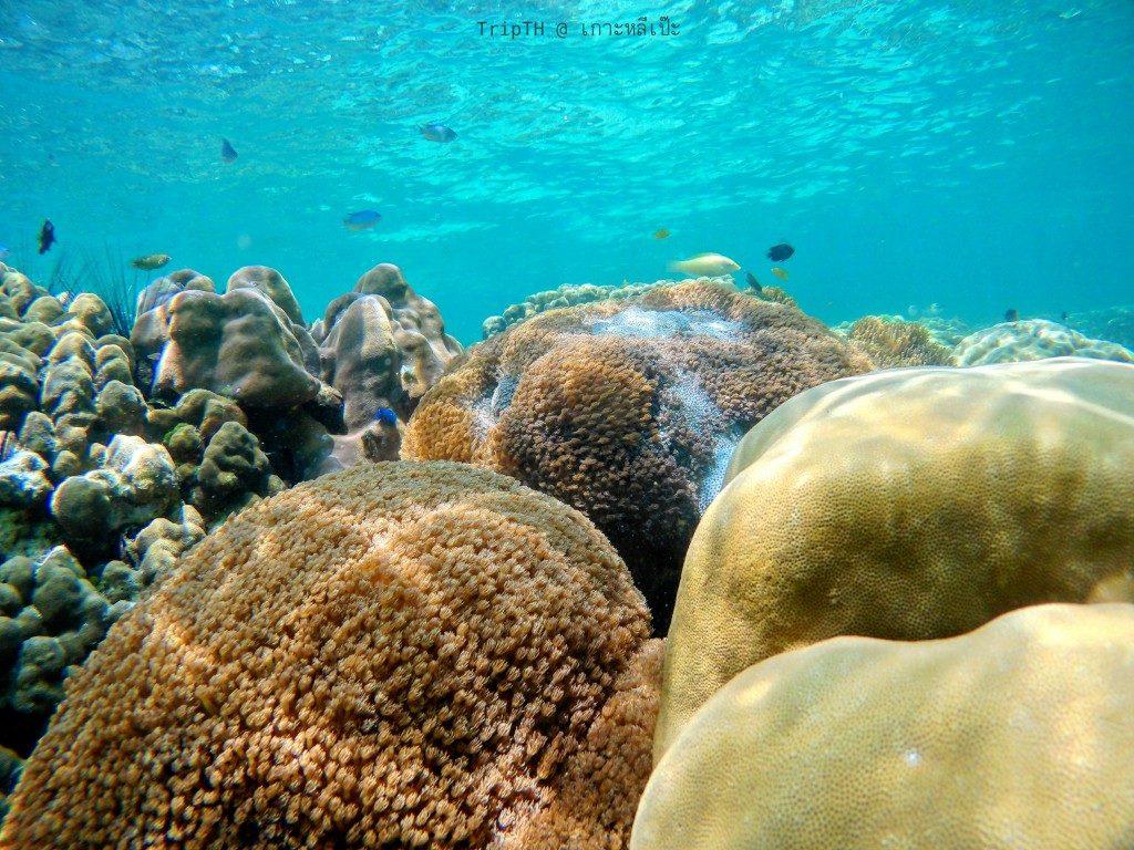 ดำน้ำ เกาะรอกลอย (3)
