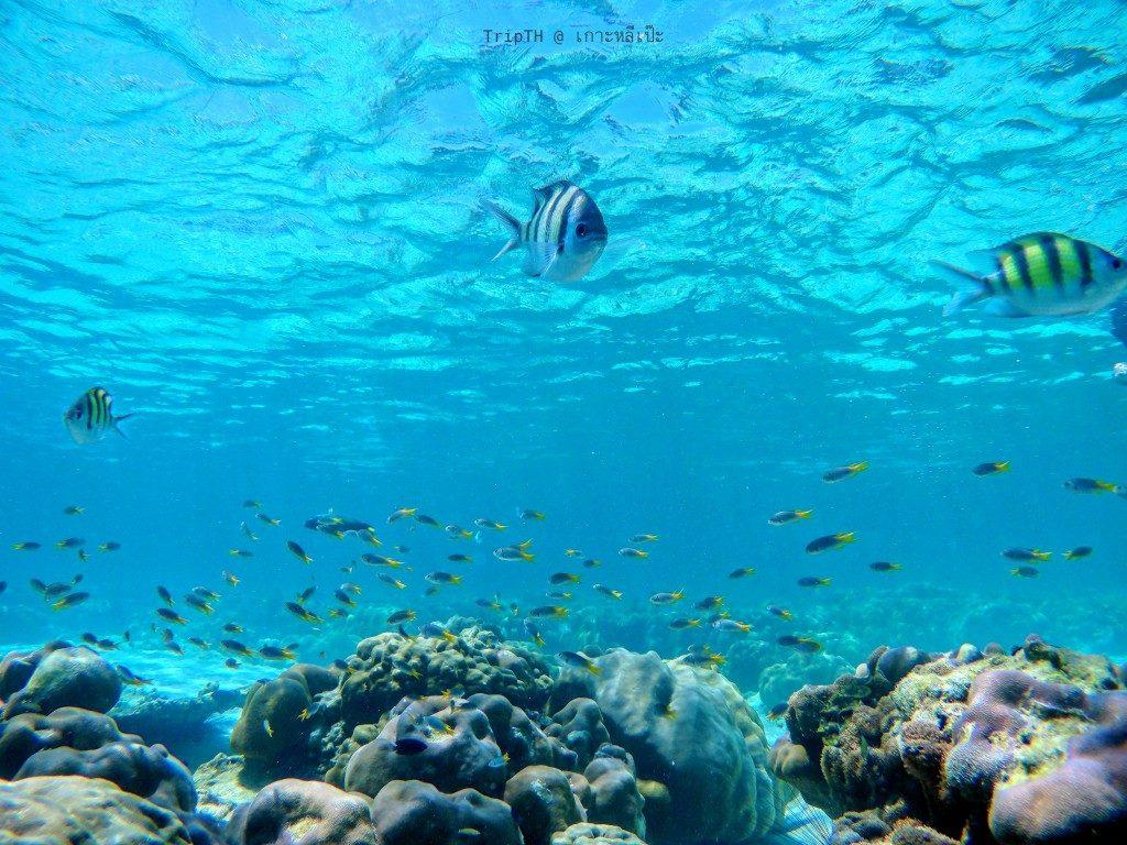 ดำน้ำ เกาะอาดัง (2)