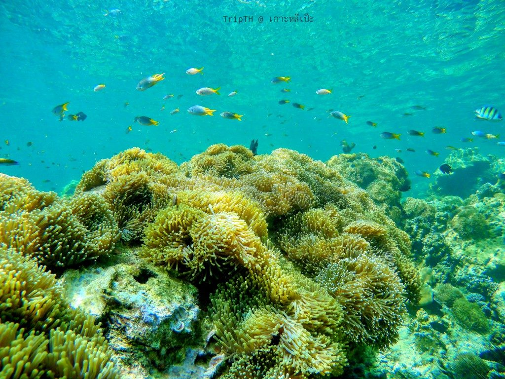 ดำน้ำ เกาะไม้ไผ่ (6)