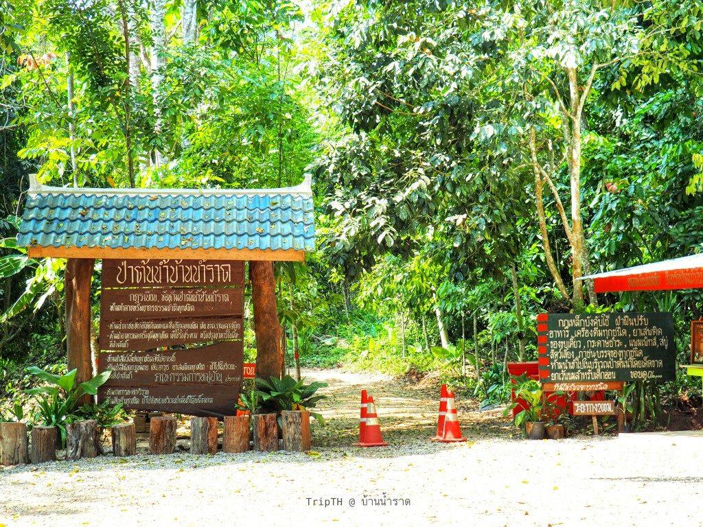 ป่าต้นน้ำ บ้านน้ำราด (1)